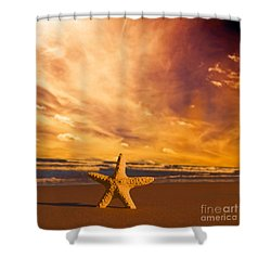 Starfish On The Beach At Sunset Shower Curtain by Michal Bednarek