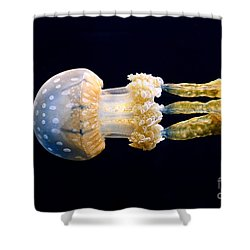 The Spotted Jelly Or Lagoon Jelly Mastigias Papua. Shower Curtain by Jamie Pham
