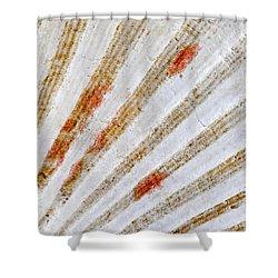 Seashell Surface Shower Curtain by Elena Elisseeva