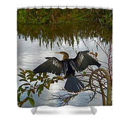 Anhinga Shower Curtain by Mark Newman