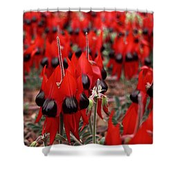 Sturt's Desert Pea Outback South Australia Shower Curtain by Carole-Anne Fooks