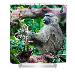 A Baboon In African Bush Shower Curtain by Michal Bednarek