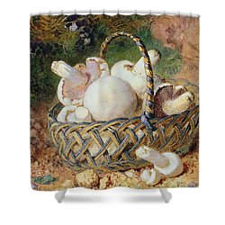 A Basket Of Mushrooms, 1871 Shower Curtain by Jabez Bligh