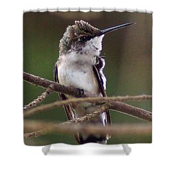 A Bit Of An Itch Shower Curtain by Kim Pate