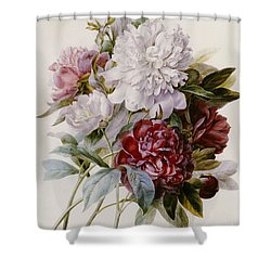 A Bouquet Of Red Pink And White Peonies Shower Curtain by Pierre Joseph Redoute