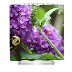A Bumblebee In The Garden Shower Curtain by Kim Pate