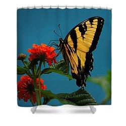 A Butterfly Shower Curtain by Raymond Salani III