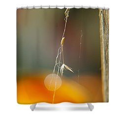 A Captured Dandelion Seed Shower Curtain by Jeff Swan