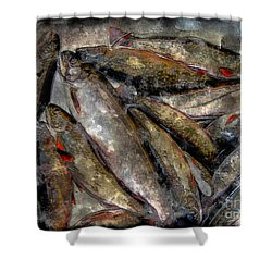 A Fine Catch Of Trout - Steel Engraving Shower Curtain by Barbara Griffin