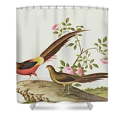 A Golden Pheasant Shower Curtain by Chinese School