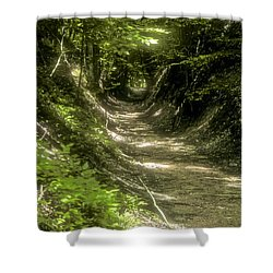 A Hole In The Forest Shower Curtain by Bob Phillips