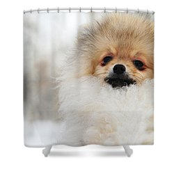 A Little Cutie Shower Curtain by Jenny Rainbow
