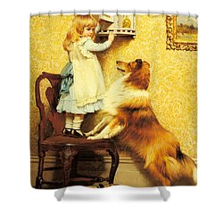 A Little Girl And Her Sheltie Shower Curtain by Charles Burton Barber