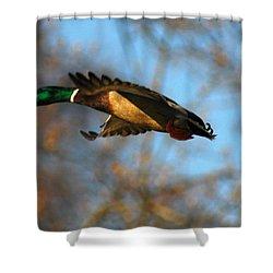 A Mallard Shower Curtain by Raymond Salani III