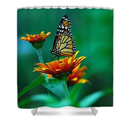 A Monarch Shower Curtain by Raymond Salani III