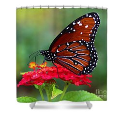 A Queen Shower Curtain by Marty Fancy