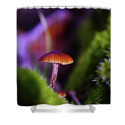 A Red Mushroom  Shower Curtain by Jeff Swan