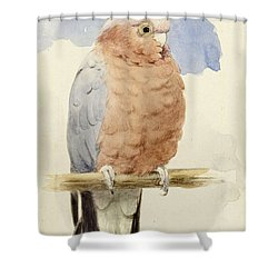 A Rose Breasted Cockatoo Shower Curtain by Henry Stacey Marks