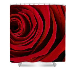 A Rose For Valentine's Day Shower Curtain by Adam Romanowicz