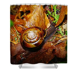 A Slow Snail Shower Curtain by Jeff Swan