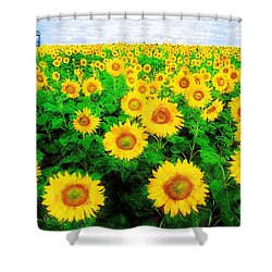 A Sunny Day With Vincent Shower Curtain by Sandy MacGowan