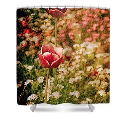A Tulip's Daydream Shower Curtain by Loriental Photography
