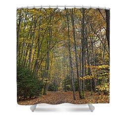 A Walk In The Woods II Shower Curtain by Michele Steffey