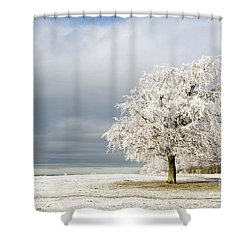 A Winter's Morning Shower Curtain by Anne Gilbert