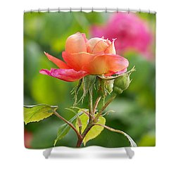 A Young Benjamin Britten Rose Shower Curtain by Rona Black