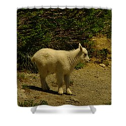 A Young Mountain Goat Shower Curtain by Jeff Swan