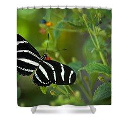 A Zebra Longwing Butterfly  Shower Curtain by Saija  Lehtonen