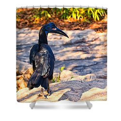 Abyssinian Ground Hornbill Shower Curtain by Chris Flees