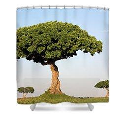 Acacia Trees Masai Mara Kenya Shower Curtain by Ingo Arndt