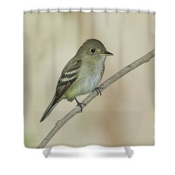 Acadian Flycatcher Shower Curtain by Anthony Mercieca