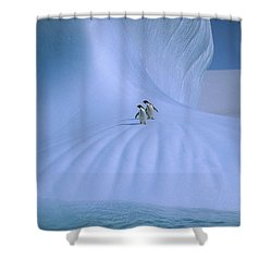 Adelie Penguins On Iceberg Antarctica Shower Curtain by Peter Sinden