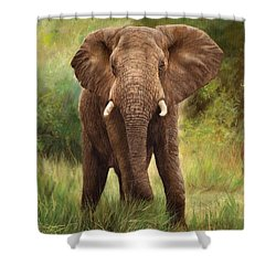 African Elephant Shower Curtain by David Stribbling