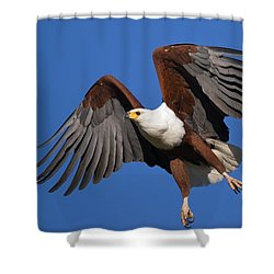 African Fish Eagle Shower Curtain by Johan Swanepoel