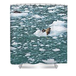 Alaska Seals Shower Curtain by Aimee L Maher Photography and Art Visit ALMGallerydotcom