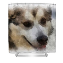 Alaskan Malamute Photo Art 08 Shower Curtain by Thomas Woolworth