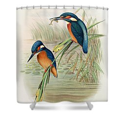 Alcedo Ispida Plate From The Birds Of Great Britain By John Gould Shower Curtain by John Gould William Hart