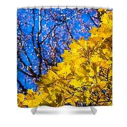 Alchemy Of Nature - Golden Streams Shower Curtain by Alexander Senin