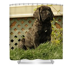 All Right Who Has My Chew Toy Shower Curtain by Jeff Swan