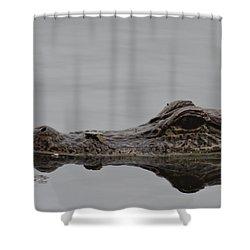 Alligator Eyes Shower Curtain by Dan Sproul