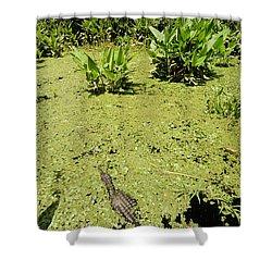 Alligator In Corkscrew Swamp, Florida Shower Curtain by Gregory G. Dimijian