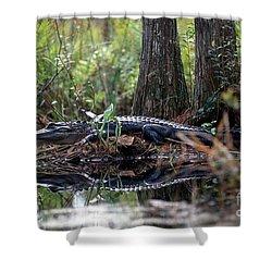 Alligator In Okefenokee Swamp Shower Curtain by William H. Mullins