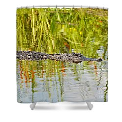 Alligator Reflection Shower Curtain by Al Powell Photography USA