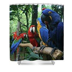 Aloha Kaua Aloha Mai No Aloha Aku Beautiful Macaw Shower Curtain by Sharon Mau