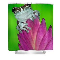 Amazon Milk Frog Trachycephalus Shower Curtain by Dennis Flaherty
