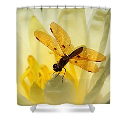 Amber Dragonfly Dancer Shower Curtain by Sabrina L Ryan