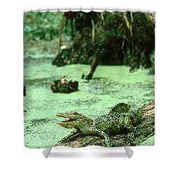American Alligator Shower Curtain by Gregory G. Dimijian, M.D.